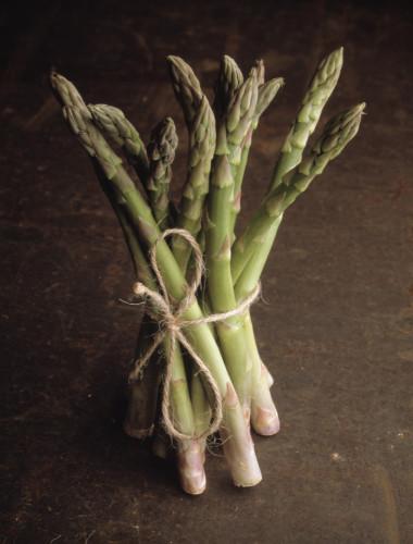 Asparagus officinalis, Asparagus by Clive Holmes Ltd
