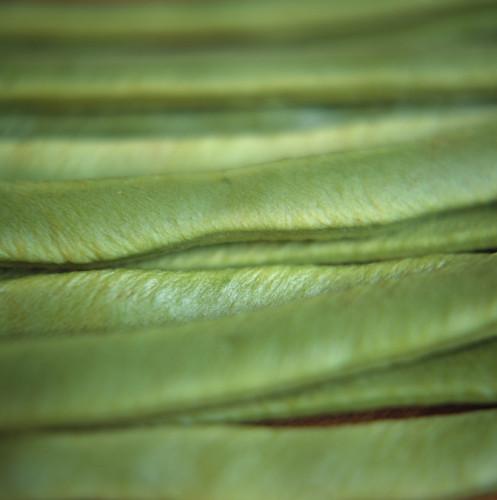 Phaseolus coccineus, Runner bean by Bjanka Kadic