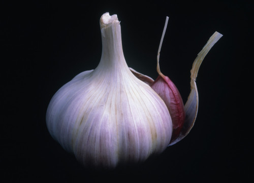 Allium sativum, Garlic by Rosemary Calvert
