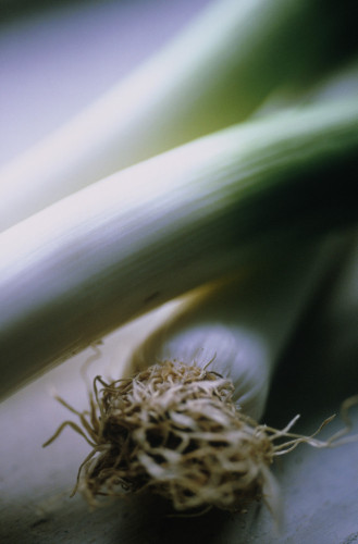 Allium ampeloprasum, Leek by Carol Sharp