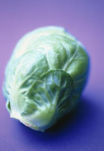 Brassica oleracea bullata, Brussel sprout by Carol Sharp
