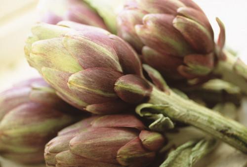 Cynara scolymus, Artichoke by Carol Sharp
