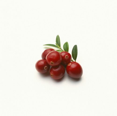 Vaccinium oxycoccos, Cranberry by Carol Sharp