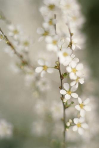 Flower by Grace Carlon