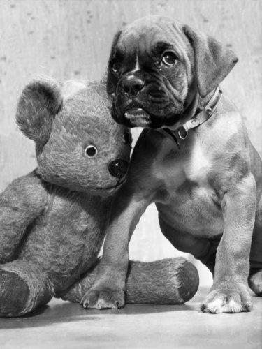 Puppy by Mirrorpix
