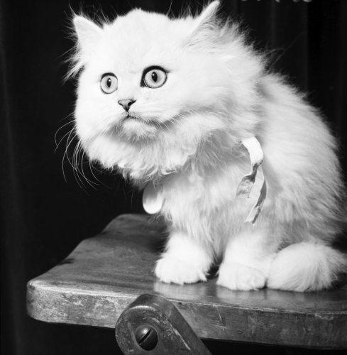Topcat by Mirrorpix