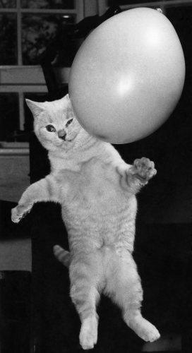 Marje Proops' cat Bennjie by Mirrorpix