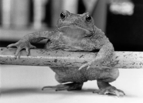 Albert the Toad by Mirrorpix