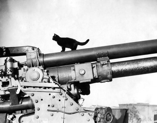 The black cat mascot of an anti-aircraft battery, 1940 by Mirrorpix