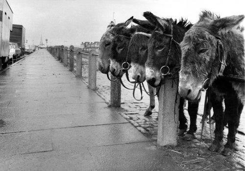 The donkey rides by Mirrorpix
