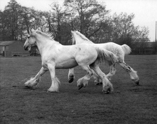 Whitebread shires Pride and Prejudice by Mirrorpix