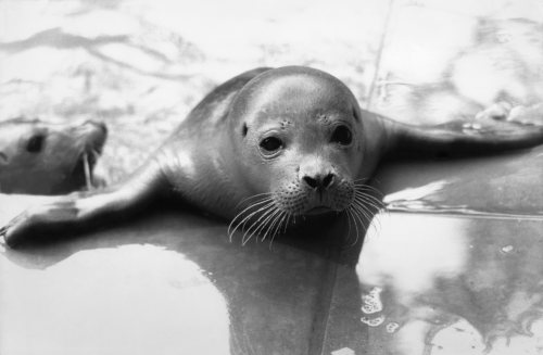 Baby seals at the Brenda Giles sanctuary in Norfolk by Mirrorpix