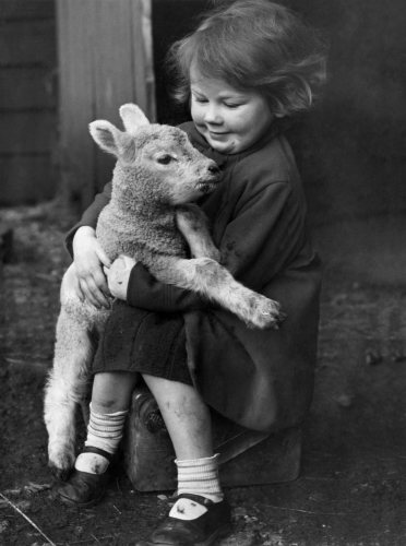 Young girl holding a little lamb, 1946 by Mirrorpix