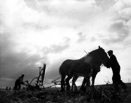 World Ploughing Contest, 1971 by Mirrorpix