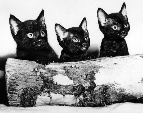 Kittens hiding behind log by Mirrorpix