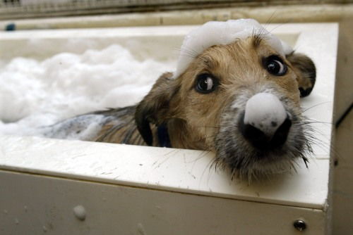 A dog having a bath by Mirrorpix