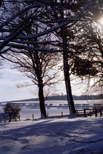 A snow scene at Adderstone Main, 2000 by Mirrorpix