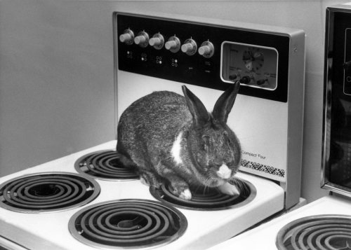 A rabbit on a electric cooker by Mirrorpix