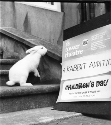 Rabbit goes for a theatre audition by Mirrorpix