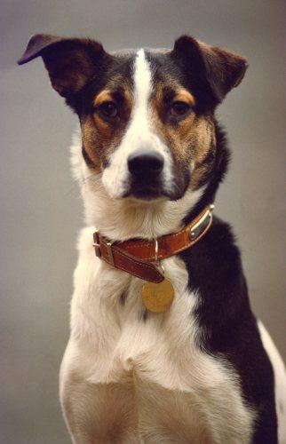 Terrier cross by Mirrorpix
