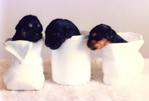 Three very young and cute puppies by Mirrorpix