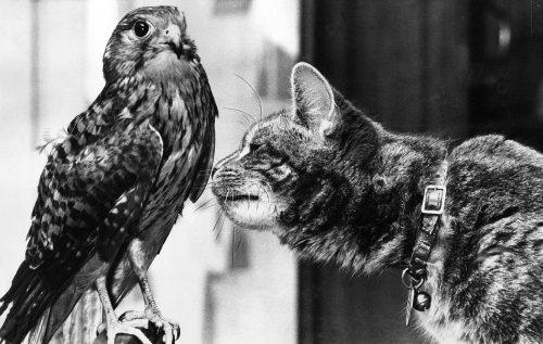 Kestrel has mada a special friend by Mirrorpix