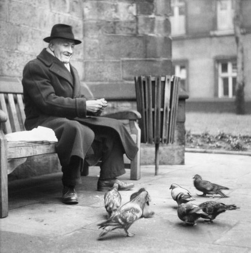 Old man feeding the pigeons in a churchyard by Mirrorpix