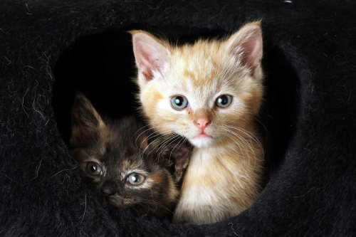Feral kittens by Mirrorpix