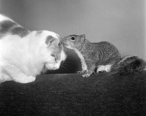 Cats and Squirrel, 1968 by Mirrorpix