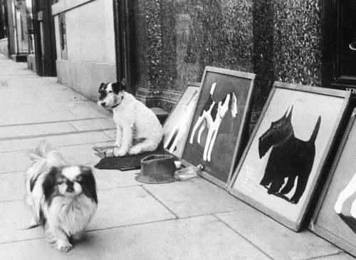 Dog passing by painting, 1950 by Mirrorpix