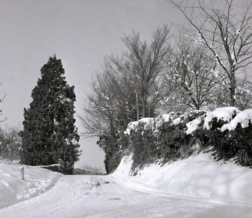 Sandy Hatch lane near Ashford by Mirrorpix