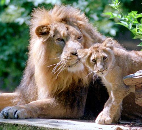 Two generations of Lions by Mirrorpix