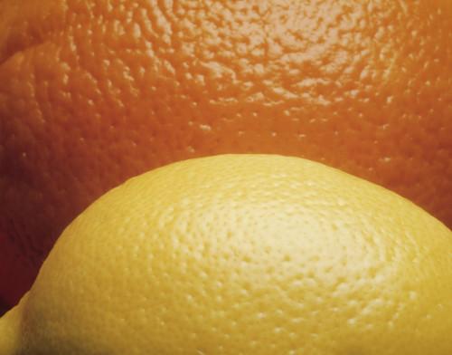 Citrus limon & citrus sinensis, Lemon & orange by Jess Koppel