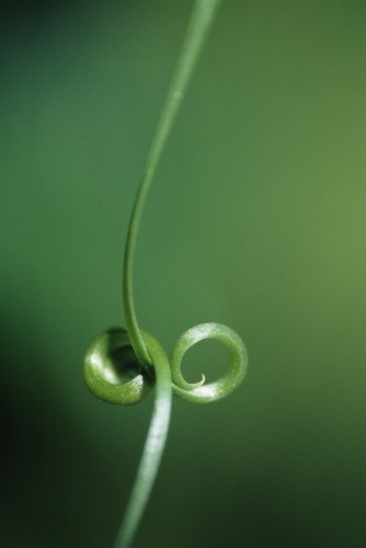 Tendril by John Bellars