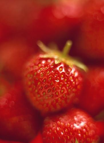 Fragaria x ananassa, Strawberry by Martin O'Neill
