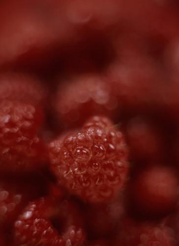 Rubus idaeus, Raspberry by Martin O'Neill
