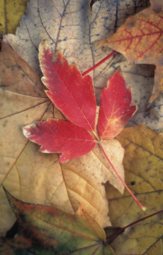 Leaf by Rob Matheson