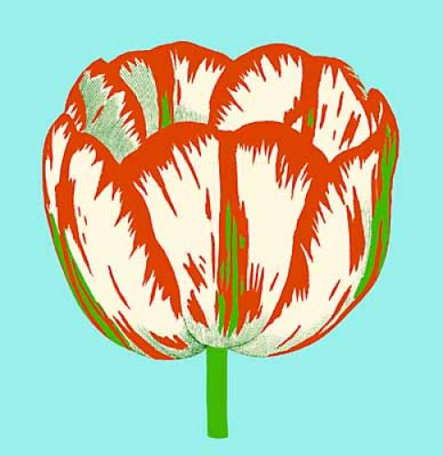Tulips I - IV, Tulip III by Modern Editions