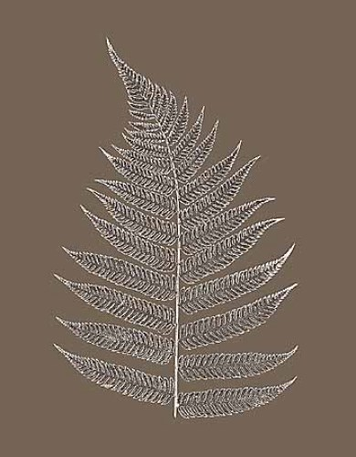 Fern Impression I - II, Impression II by Modern Editions
