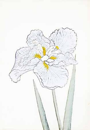 Japanese Irises I - IV, Japanese Iris II by Modern Editions
