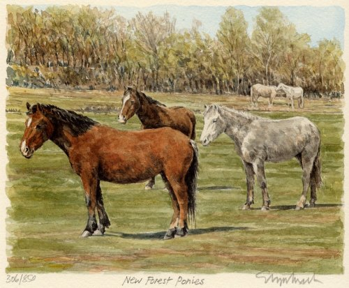 New Forest ponies by Glyn Martin