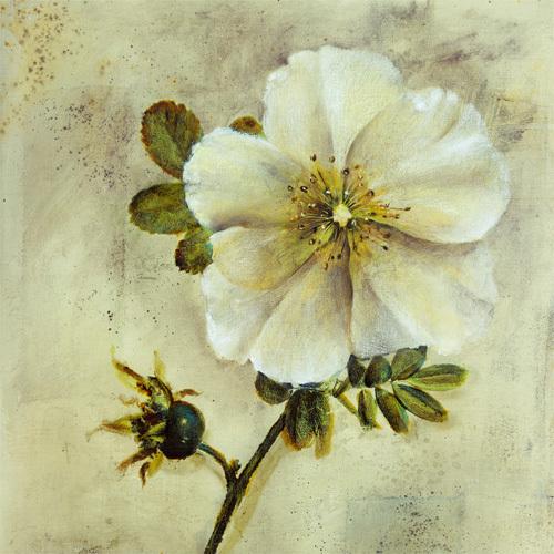 Floral Blush I by Dennis Carney