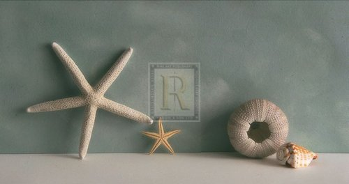 Starfish I by Bill Philip