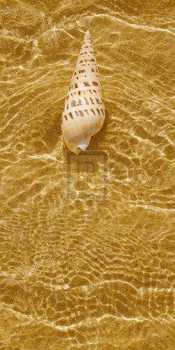 Ripple Shell I by Tony Koukos