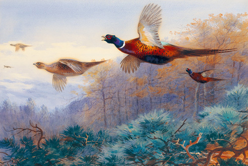 Pheasants In Flight by Archibald Thorburn
