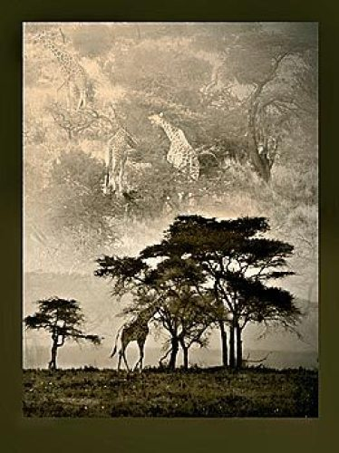 Tanzanian Landscape by Bobbie Goodrich