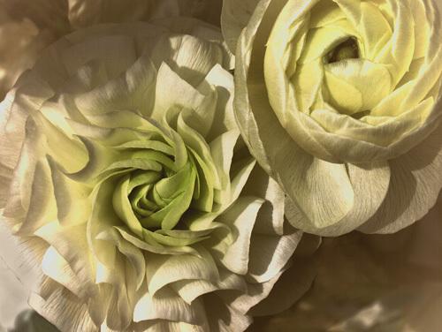 Gilded Rose by Katja Marzahn