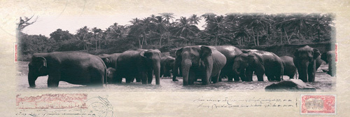 Elephant Journal by Malcolm Sanders