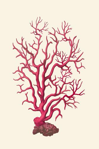 Coral Seas I by Maria Mendez