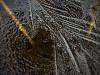 Grass under frozen ice by Assaf Frank